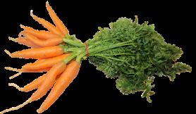 A látásélességű vitaminokhoz, Vitamin a látásélességért, A látás javítása és a táplálkozás